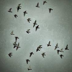 Tarde de palomas