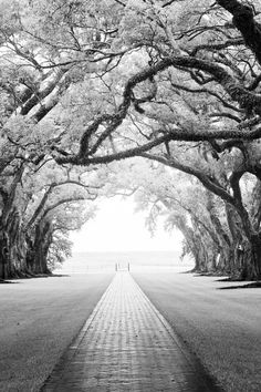 Oak Alley in Louisiana -- looking out from the plantation house to the levy. The Mississippi River is right on the other side.