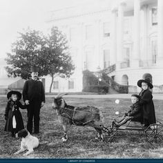 President Benjamin Harrisons son Russell Harrison had a pet goat named Old Whiskers. This goat was so ornery that one day the President was forced to chase him down Pennsylvania Avenue when he decided to run away with the Harrison grandchildren. Us History, American History, American Pride, Old Pictures, Old Photos, Antique Photos, Animal Pictures, Benjamin Harrison, Presidential History