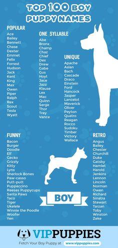 65 Dog Names Ideas Dog Names Girl Dog Names Girl And Dog