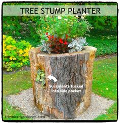 Need a little inspiration for a feature planter? Upcycle a tree stump. Chisel out the top, drill some drainage holes & add potting mix. With thoughtful plant choices you can add a splash of colour and create a focal point for your garden. By the time the stump decomposes, you'll have free compost or mulch. More creative container ideas @ http://themicrogardener.com/category/container-ideas/container-ideas-repurposed-planters/ | The Micro Gardener