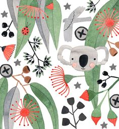 Australian Flora and Fauna Illustration
