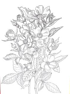 Małgorzata Jaskłowska - malarstwo i grafika Flower Coloring Pages, Colouring Pages, Printable Coloring Pages, Adult Coloring Pages, Coloring Books, Flower Line Drawings, Flower Sketches, Floral Embroidery Patterns, Art Plastique
