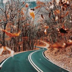 WEBSTA @ shaym - Counting down until I get an east coast fall drive like this 🍂🍁🌲