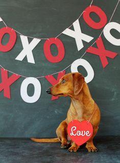 Happy Valentine's Day Friends // Ammo the Dachshund Puppy Dog Dogs Puppies Happy Valentine's Day Friend, Valentines Day Dog, Weenie Dogs, Doggies, Dachshund Love, Daschund, Dog Bones, Puppy Pictures, Dog Photos