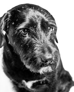 Pet Portraits Beautiful Life Photography Studio