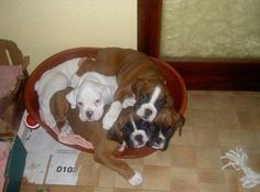 Puppy pile ... Love it!