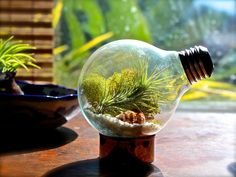 Air plant terrarium made from an up-cycled light bulb. How cool!