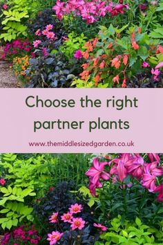 What to plant with dahlias in pots in your container garden #middlesizedgarden Grasses For Pots, Growing Dahlias, Garden Privacy, Herbaceous Border, Border Plants, Soil Layers, Color Balance, Garden Borders