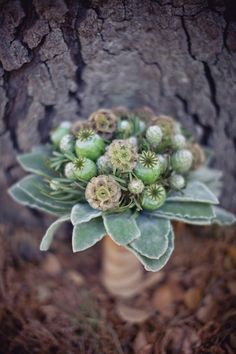 scabiosa pods, poppy pods and lambs ear....... gorgeous....maybe all green for bridesmaids???