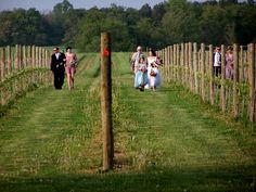 Brook and Brandon Wedding Approach thru vineyard Pink Day, Green Wedding, Cherry Blossom, Event Planning, Digital Marketing, Eco Friendly, Vineyard, Events, Cherry Blossoms