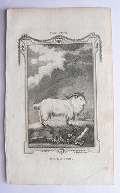 1791 Buffon Engraving, Antique Goat Engraving Ram, Buck of Juda, Original Vintage Farm Animal Art for Groupings, Gift for Home Decor available from OldMapsandPrints.Etsy.com #AntiqueBuffonEngraving #SheepPrint #FarmAnimalArt
