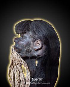 "Real Shrunken Head Photo.  ""Nantu"" www.RealShrunkenHeads.com Tsantsa: Oddities & Curiosities"