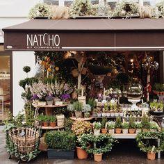 48 new ideas flowers shop cafe plants Flower Farm, My Flower, Cafe Plants, Garden Plants, Flower Market, Flower Shops, Shop Fronts, Garden Shop, Planting Flowers