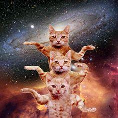 #Space #cats via @howkapow More