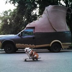 Beefy the Bulldog likes the #LLBean Bootmobile