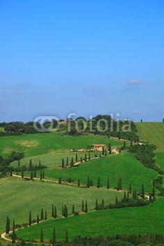 Zypressen,Kurve,Hügellandschaft,Toskana,Val d Orcia,La Foce Titel Motiv Hochformat