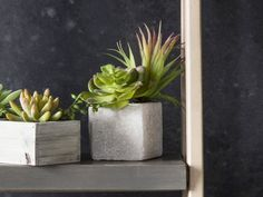 Gallery Direct Set of 6 Faux Succulents in Square Stone Planters Faux Succulents, Faux Plants, Succulent Pots, Planting Succulents, Potted Plants, Planting Flowers, Stone Planters, Square Planters, Planter Pots