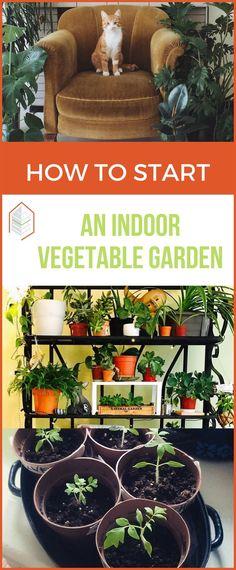 Tips on how to start an indoor vegetable garden