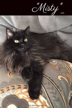 Cat memes, videos and tips for your furry buddy. Photography, streaming memes and gifs wrapped up with fun and educational videos based on cat life. Maine Coon Cats, Black Cats, Funny Cute, Cat Lovers, Pictures, Animals, Beautiful, Photos, Animales