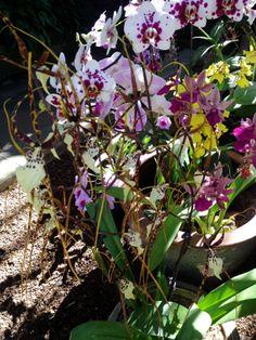 Rainbow of orchids