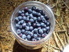 Blueberry :3