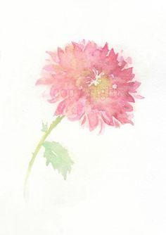 Fine art watercolor painting, flower art, pink CHRYSANTHEMUM WATERCOLOR PRINT, giclee print, flower interest 8x10. $15.00, via Etsy.