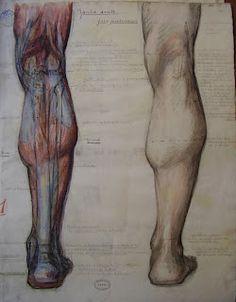 Leg drawing