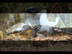 The Beauty of Kiawah Island, South Carolina prints avaiable on Fine Art America Beautiful Forest, Bird Watching, Art For Sale, South Carolina, Fine Art America, Wildlife, Island, Sunset, Beach