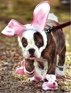 easter puppy!