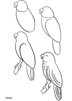 How to Draw... this is elementary but gives the overall shape for an impressionistic parrot watercolor