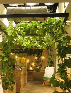 Ultimissime dall'orto: l' #orto in ufficio - Urban farm by Kono Designs, Pasona Group, Tokyo #kitchengarden
