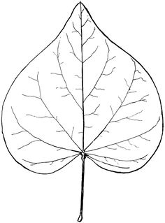 leafspringorautumnlineartpng Pinterest Fall Leaves Cl