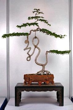 The ancient Japanese art of Bonsai creates a miniature version of a fully grown tree through careful potting, pruning and training. Even if you& not zen enough to labour over your own Bonsai,. Ikebana, Plantas Bonsai, Ancient Japanese Art, Indoor Bonsai, Miniature Trees, Bonsai Garden, Arte Floral, Growing Tree, Small Trees