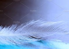 Whisper Photos A feather on a blue background by Lassi's Goods