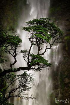 Devils Punchbowl Waterfall, Arthur's Pass National Park, New Zealand. (http://pinterify.org/pin/137922807314806084)