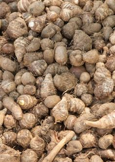 15 Best Benefits Of Arrowroot For Skin, Hair And Health