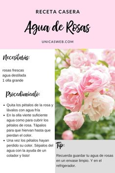 Receta para bajar de peso con hiedra y agua de rosas