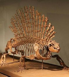 """Edaphosaurus , meaning """"pavement lizard"""" for dense clusters of teeth) is a genus of extinct edaphosaurid synapsid that lived around 300 to 280 million years ago, during the late Carboniferous to early Permianperiods. The American paleontologist Edward Drinker Cope first described Edaphosaurus in 1882,naming it for the """"dental pavement"""" on both the upper and lower jaws, (""""groun/sauros (""""lizard"""")"""