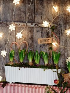Windowbox filled with bulbs Ikea Christmas, Christmas Plants, Nordic Christmas, Natural Christmas, Christmas Mood, Christmas Gift Wrapping, Diy Christmas Ornaments, Beautiful Christmas, Christmas Decorations