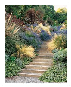 The first rule of stair-side plants: What grows by your feet gets extra attention. The etched leaves of Hedera helix 'Needlepoint,' the gold-plumed Stipa tenuissima, and Lavandula 'Grosso,' which releases its scent when rubbed, all reward close scrutiny. Hillside Garden, Hillside Landscaping, Garden Paths, Sloped Garden, Herb Garden, Garden Beds, Landscaping Ideas, Garden Stairs, Ornamental Grasses