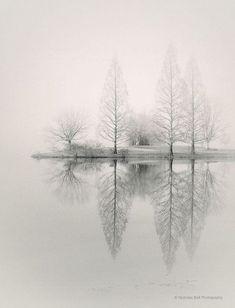 landscape photography, monochromatic, nature, fog, foggy, trees, winter, WINTER PARK, 8 x 10 prin #landscape photography, monochromatic, nature, fog, foggy, trees, winter, WINTER PARK, 8 x 10 print
