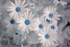 Summer Flowers by ekillian