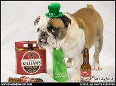 """Bulldog wearing """"party like a leprechaun"""" tie and amongst Killian's Irish Red beer bottles. (St. Pattie's dog) Love this photo? Re-pin it!"""