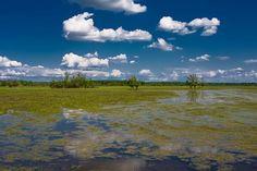 Wettland area in the Nature park Lonsko polje (near the river Sava) - Croatia[PP Lonjsko Polje] - photo thread - SkyscraperCity
