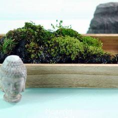 Micro Landscape Moss Garden Bonsai Lawn Mini Mossy Fish Tank Dry Lichen Decor