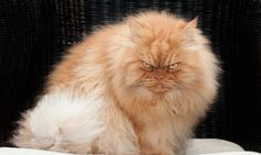 Garfi, The World's Angriest Cat - 9GAG
