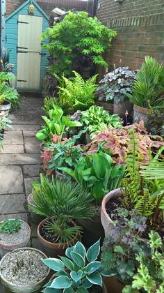 Container gardening is a fun way to add to the visual attraction of your home. You can use the terrific suggestions given here to start improving your garden or begin a new one today. Your garden is certain to bring you great satisfac Garden Sink, Garden Planters, Succulents Garden, Container Gardening Vegetables, Container Plants, Gemüseanbau In Kübeln, Pot Plante, Small Garden Design, Small Garden Planting Ideas