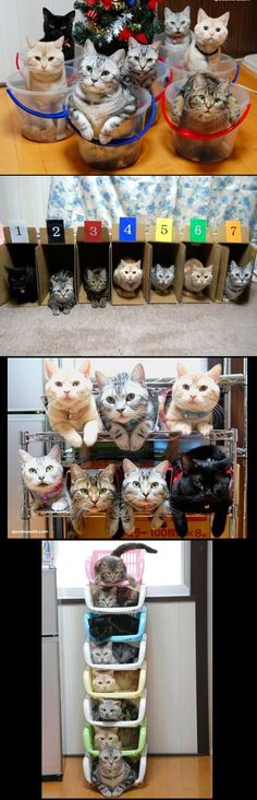 Great idea to store all those cats ... ;) I love the person that came up with these cute pics. I can't believe these cats stood still.