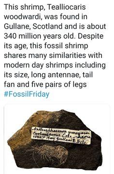 Fossil Hunting, Food, Essen, Meals, Yemek, Eten
